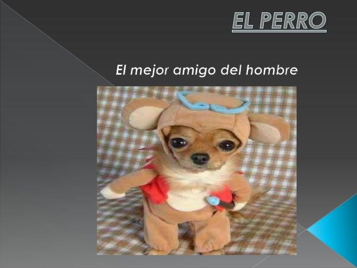 EL PERRO<br />El mejor amigo del hombre<br />
