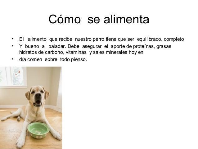 el perro alejandra