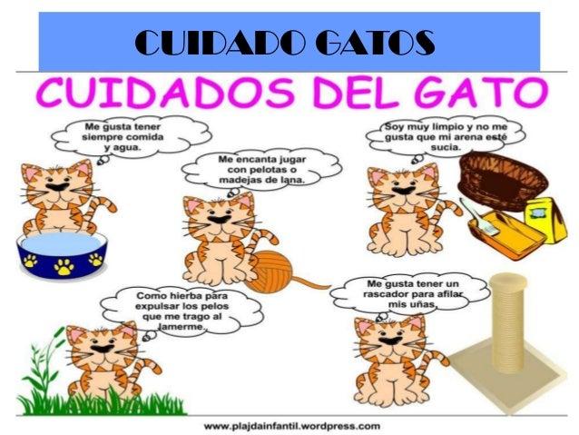 El perro y el gato1 - Cuidados gato 1 mes ...