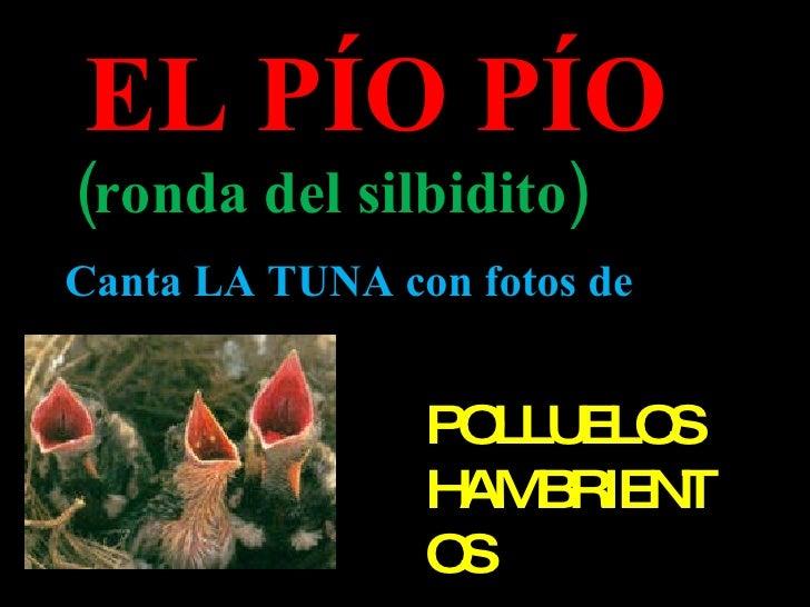 EL PÍO PÍO (ronda del silbidito) Canta LA TUNA con fotos de  POLLUELOS HAMBRIENTOS