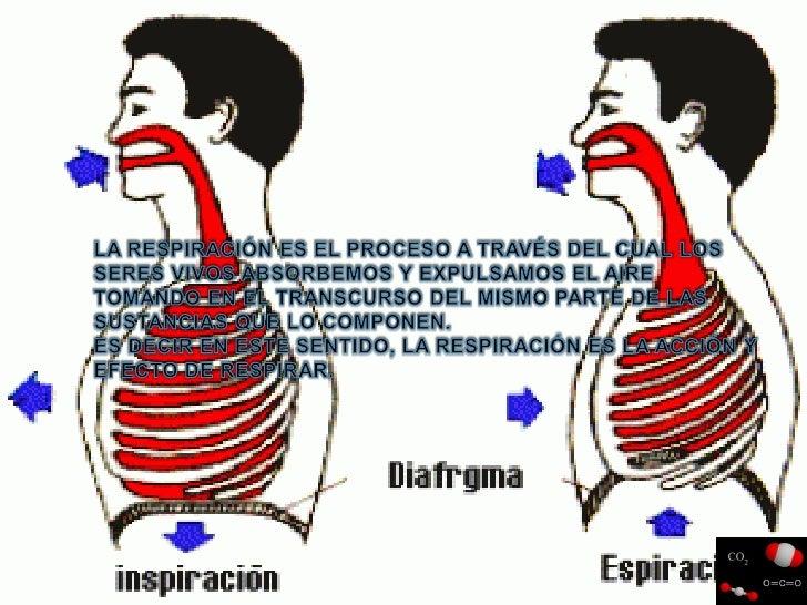 El proceso de la respiración
