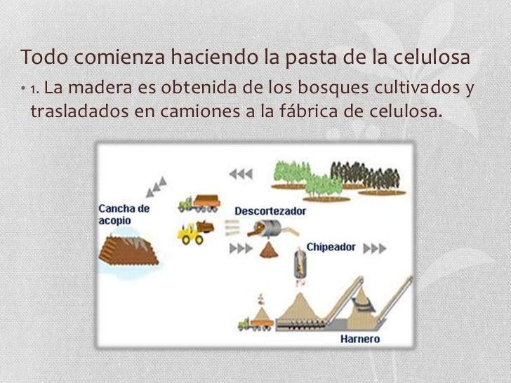 El proceso del papel for Que son las vetas de la madera