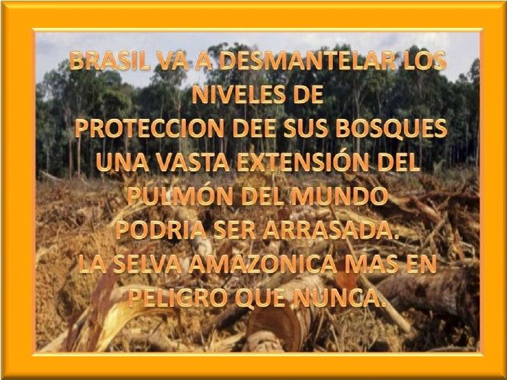 BRASIL VA A DESMANTELAR LOS NIVELES DE PROTECCION DEE SUS BOSQUES UNA VASTA EXTENSIÓN DEL PULMÓN DEL MUNDOPODRIA SER ARRAS...