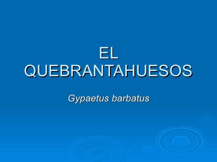 EL QUEBRANTAHUESOS Gypaetus barbatus