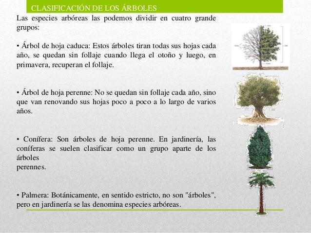El rbol como parte fundamental del ecosistema for Arboles de jardin de hoja caduca