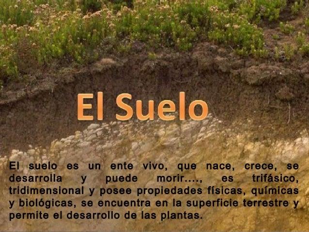 El recurso suelo for Recurso clausula suelo