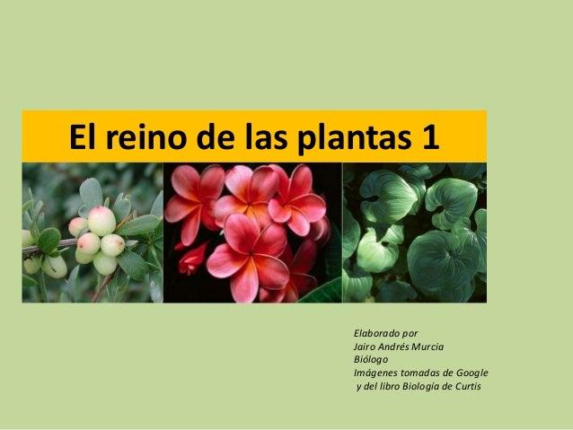 El reino de las plantas 1Elaborado porJairo Andrés MurciaBiólogoImágenes tomadas de Googley del libro Biología de Curtis
