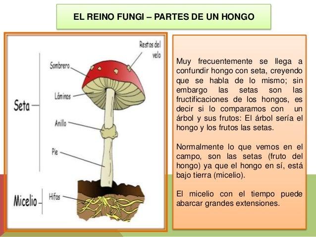 El método comprobado del tratamiento del hongo de las uñas