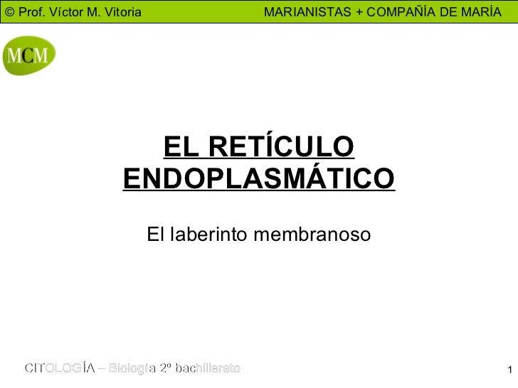 EL RETÍCULO ENDOPLASMÁTICO El laberinto membranoso