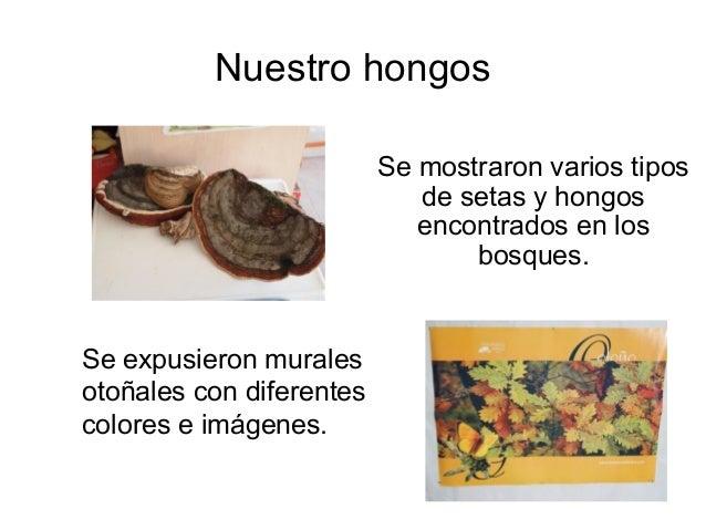 Nuestro hongos                          Se mostraron varios tipos                             de setas y hongos           ...