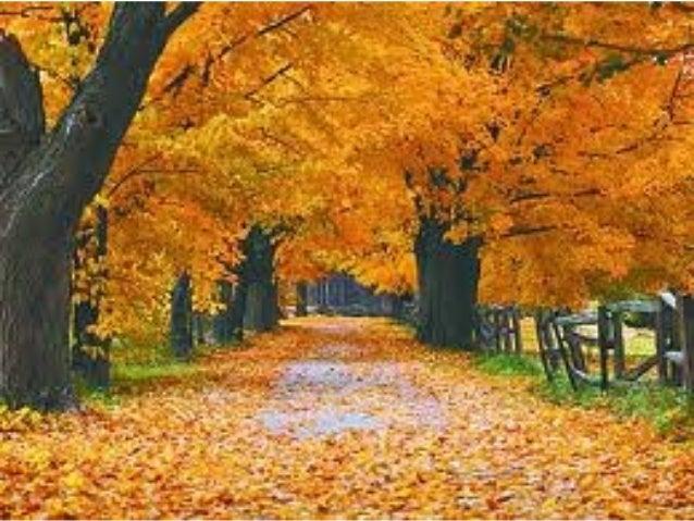El rincón del otoño