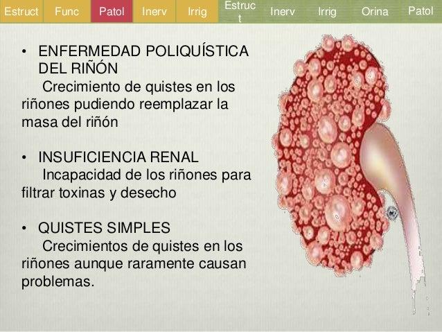 el riñon y las vias urinarias