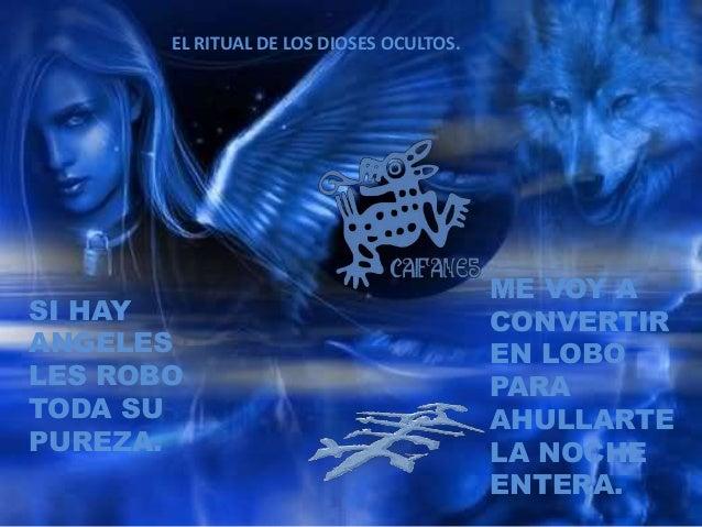 SI HAY ANGELES LES ROBO TODA SU PUREZA. ME VOY A CONVERTIR EN LOBO PARA AHULLARTE LA NOCHE ENTERA. EL RITUAL DE LOS DIOSES...