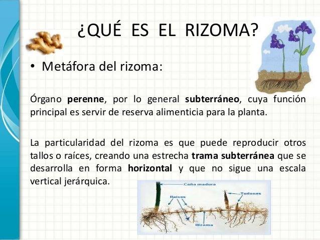 El rizoma deleuze jaime reyes f for Que es un vivero de plantas
