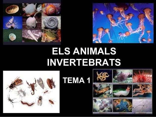 ELS ANIMALS INVERTEBRATS TEMA 1