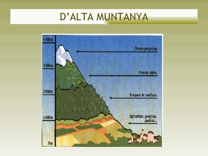 D'ALTA MUNTANYA