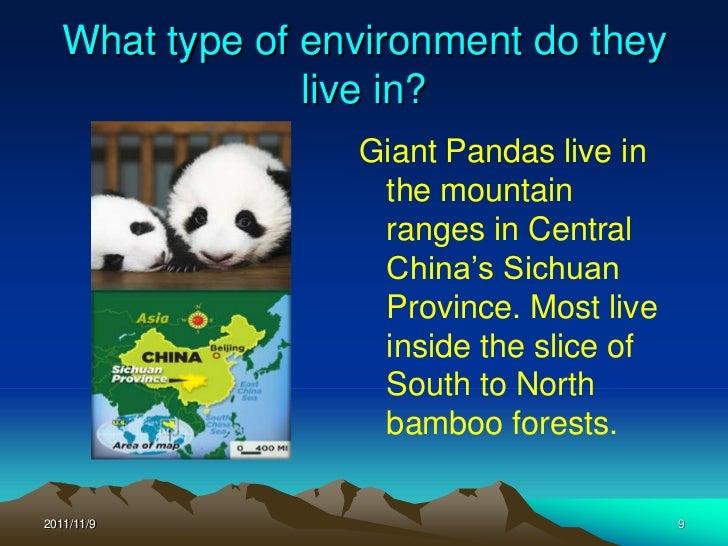 What Type Of Food Do Giant Pandas Eat