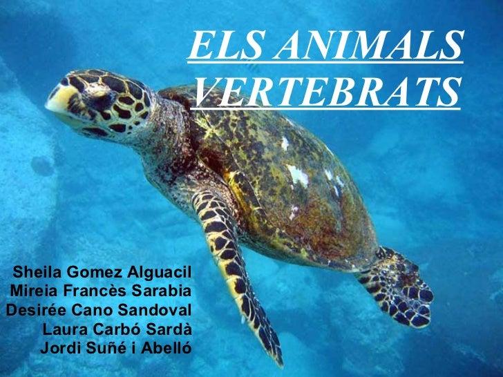 ELS ANIMALS VERTEBRATS Sheila Gomez Alguacil Mireia Francès Sarabia Desirée Cano Sandoval Laura Carbó Sardà Jordi Suñé i A...