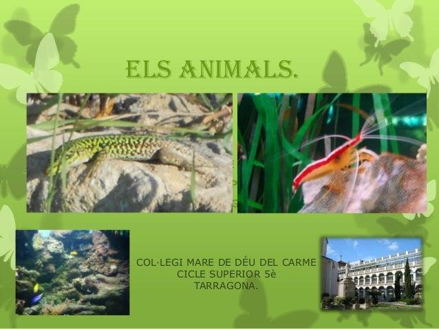 ELS ANIMALS. COL.LEGI MARE DE DÉU DEL CARME        CICLE SUPERIOR.           TARRAGONA    COL·LEGI MARE DE DÉU DEL CARM...