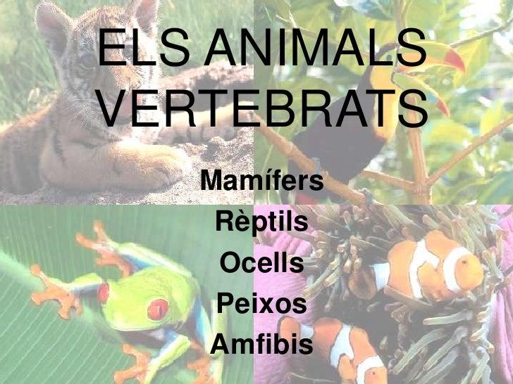 ELS ANIMALS VERTEBRATS<br />Mamífers<br />Rèptils<br />Ocells<br />Peixos<br />Amfibis<br />