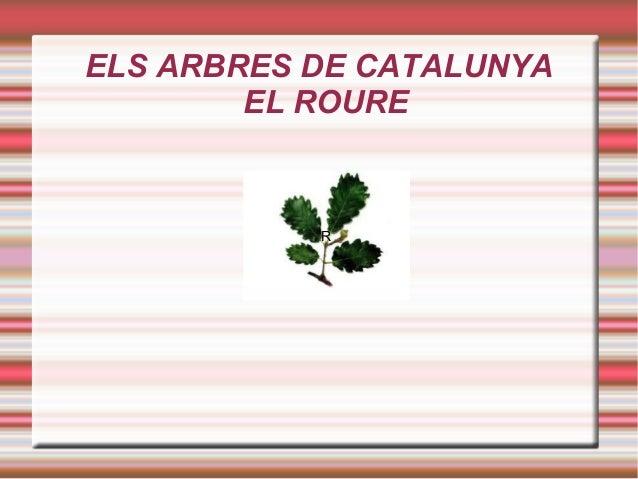 ELS ARBRES DE CATALUNYA EL ROURE ROURE R
