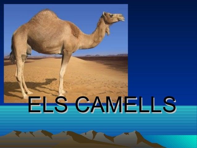 ELS CAMELLS