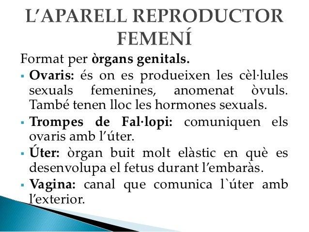 Hormones sexuals femenines