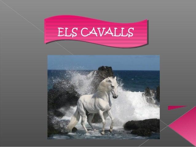 ELS CAVALLSELS CAVALLS
