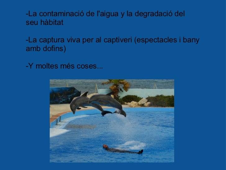 -La contaminació de l'aigua y la degradació del seu hàbitat -La captura viva per al captiveri (espectacles i bany amb dof...