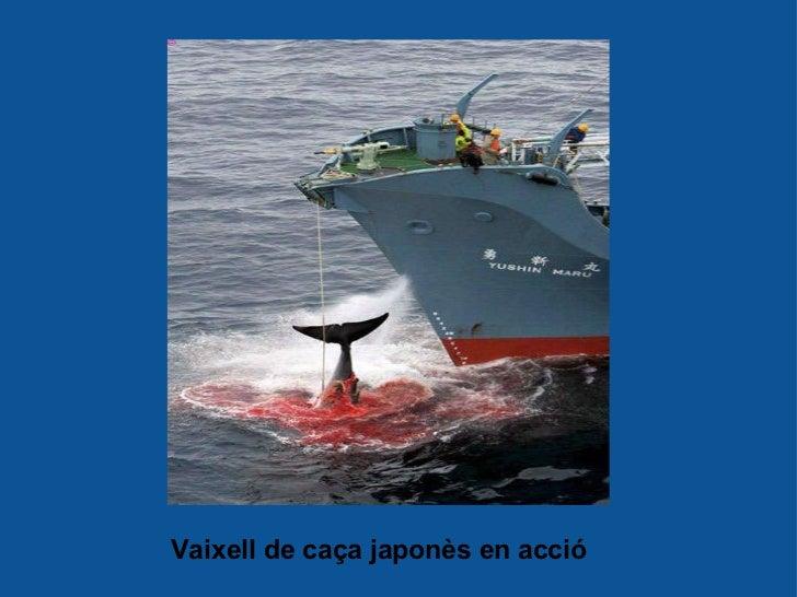 Vaixell de caçajaponès en acció