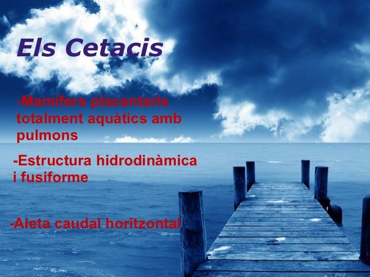 Els Cetacis  -Mamífers placentaris totalment aquàtics   amb pulmons   -Estructura hidrodinàmica i fusiforme -Aleta caudal ...