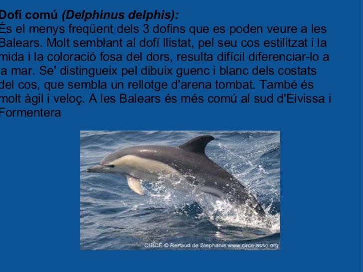 Dofí comú  (Delphinus delphis): És el menys freqüent dels 3 dofins que es poden veure a les Balears. Molt semblant al dofí...