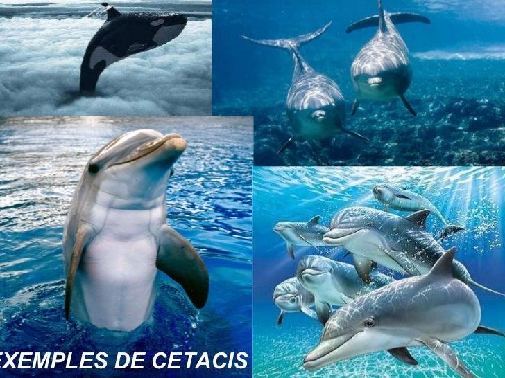 EXEMPLES DE CETACIS