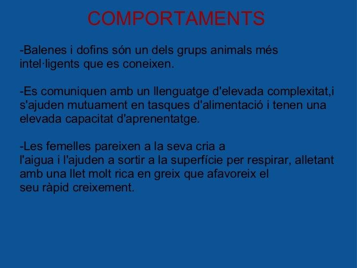 COMPORTAMENTS -Balenes i dofins són un dels grups animals més intel·ligents que es coneixen. -Es comuniquen amb un llengu...