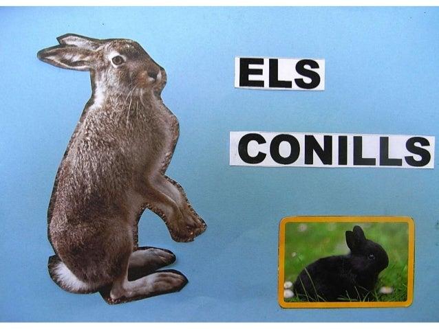 Els conills