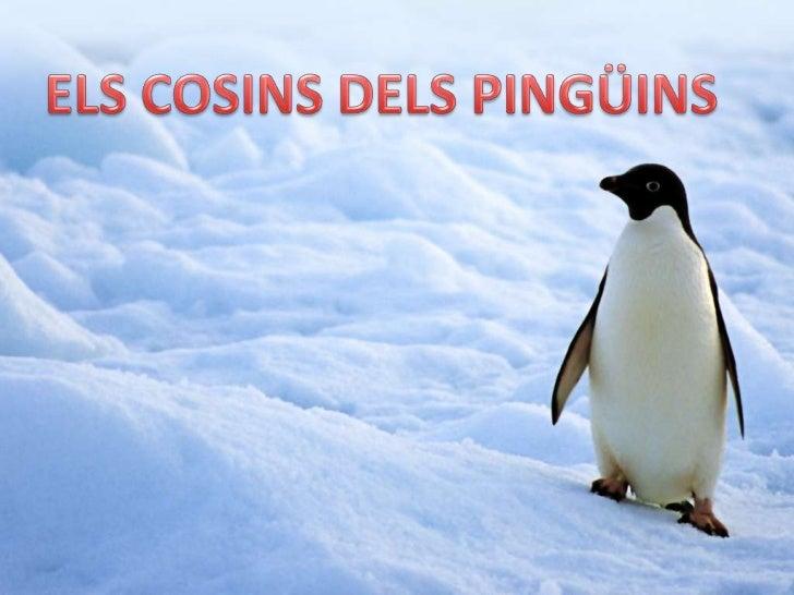 ELS COSINS DELS PINGÜINS<br />