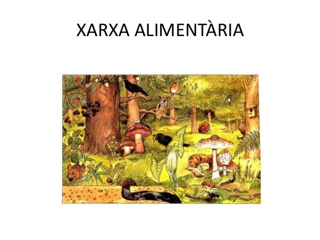 XARXES ALIMENTÀRIES