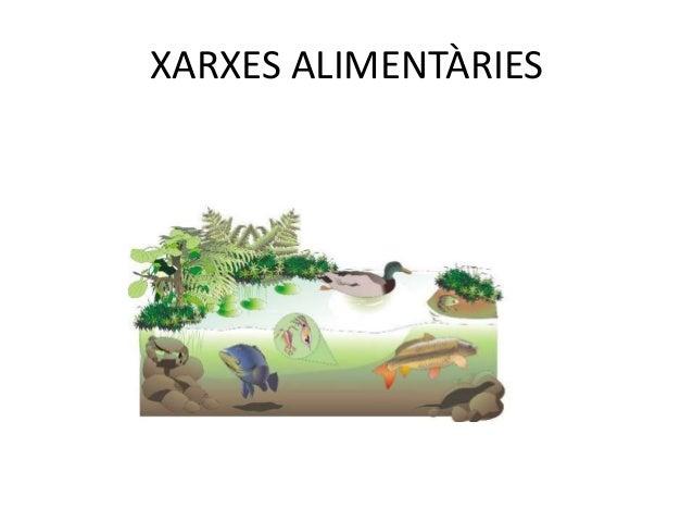 CONSUMIDORS SECUNDARIS• Els animals que mengen animals herbívors els  considerem consumidors secundaris.