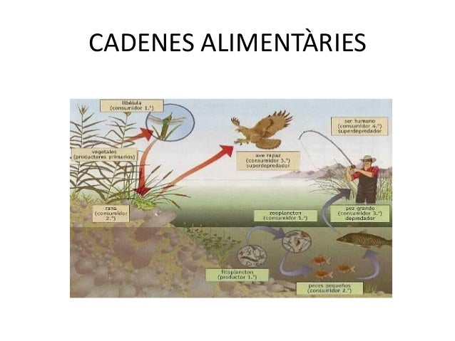 • http://portal.perueduca.edu.pe/modulos/r_ecosi  stemas/ecosistemas.html• http://www.google.es/imgres?q=consumidors+secun...