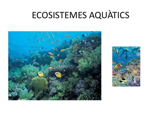 ECOSISTEMES TERRESTRES• En el medi terrestre, el clima influeix de  manera decisiva en el tipus d'ecosistemes que  s'hi fo...