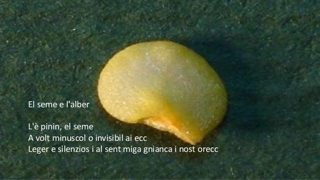 El seme e l'alber L'è pinin, el seme A volt minuscol o invisibil ai ecc Leger e silenzios i al sent miga gnianca i nost or...