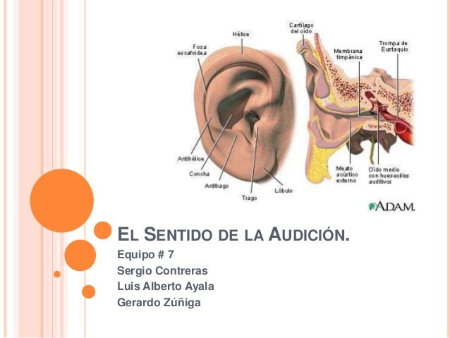 web de putas audición
