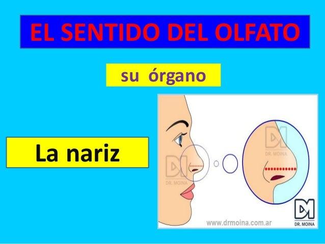 El sentido del olfato 2º