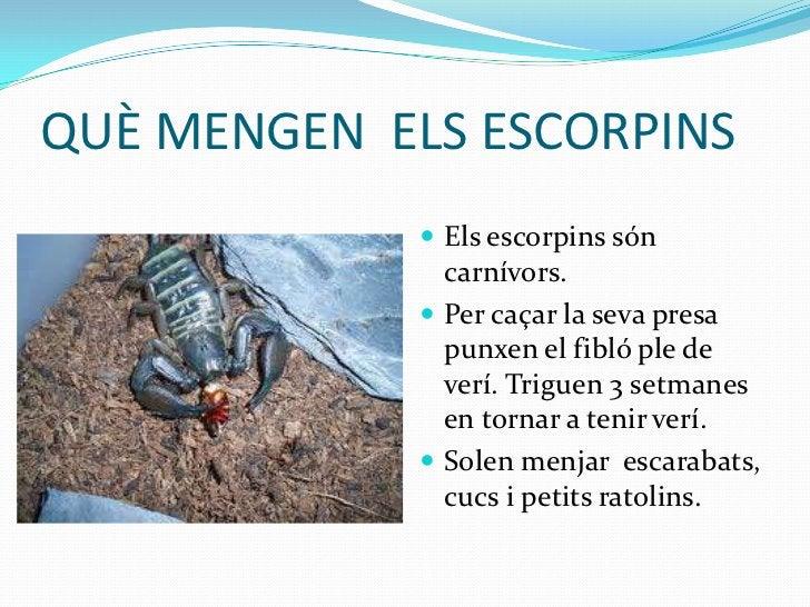 QUÈ MENGEN ELS ESCORPINS              Els escorpins són               carnívors.              Per caçar la seva presa   ...