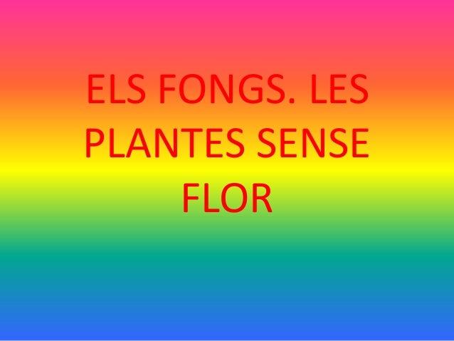 ELS FONGS. LES PLANTES SENSE FLOR
