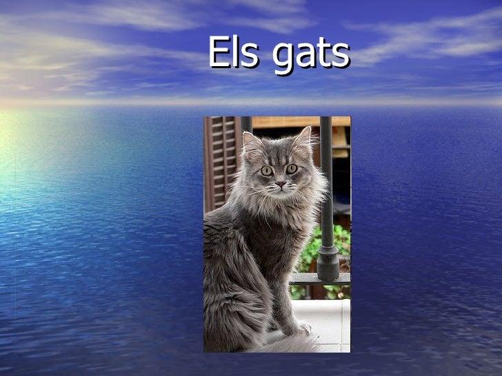 Els gats .