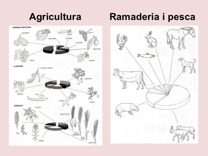 Ramaderia i pesca Agricultura
