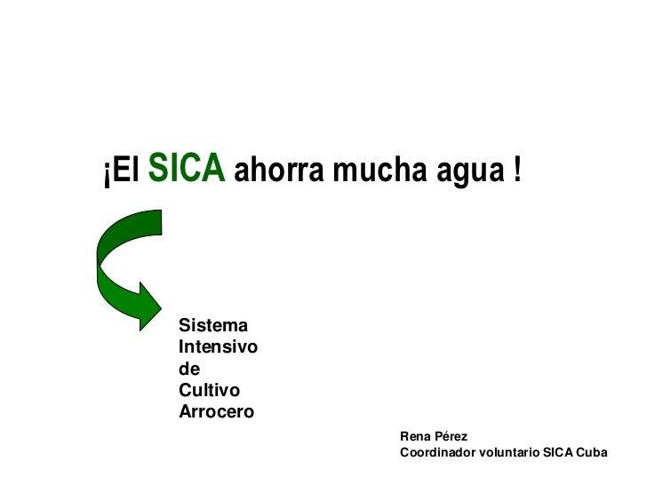 ¡El SICA ahorra mucha agua !     Sistema     Intensivo     de     Cultivo     Arrocero                   Rena Pérez       ...