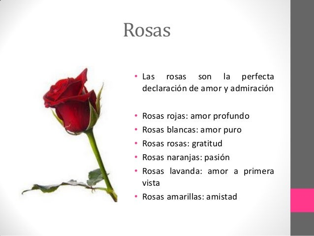 El significado de las flores - Significado rosas blancas ...