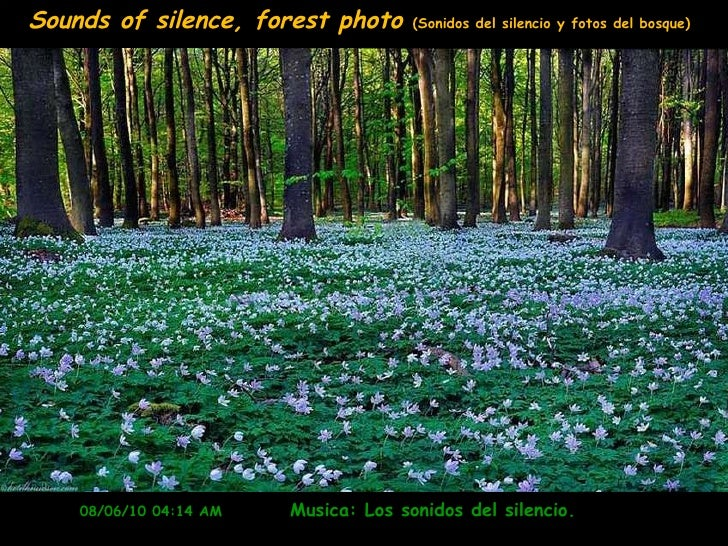 08/06/10   04:14 AM   Musica: Los sonidos del silencio.  Sounds of silence, forest photo  (Sonidos del silencio y fotos de...